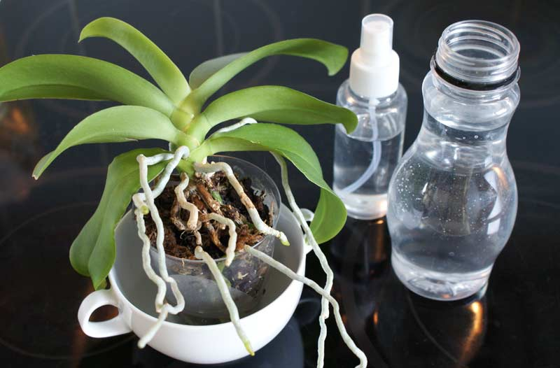 How To Water An Orchid Tips And