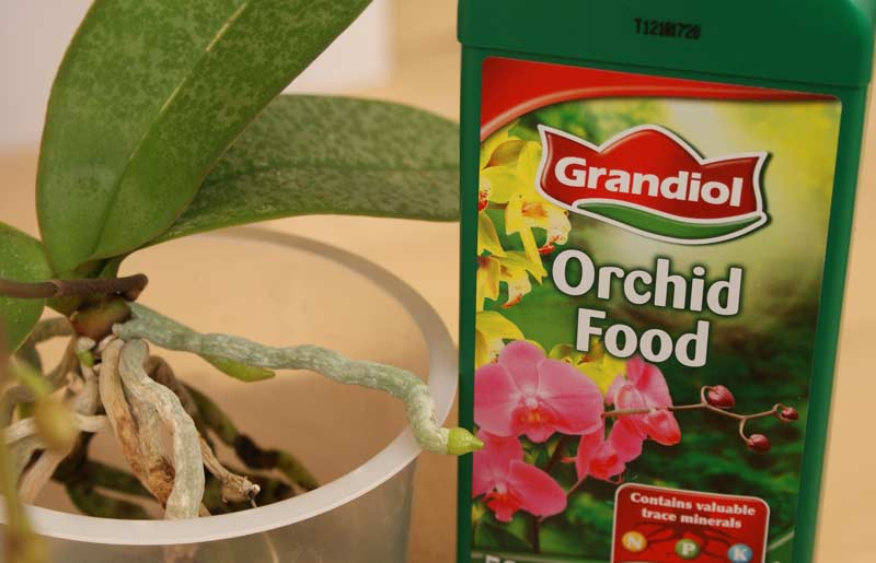 What should I feed my orchids