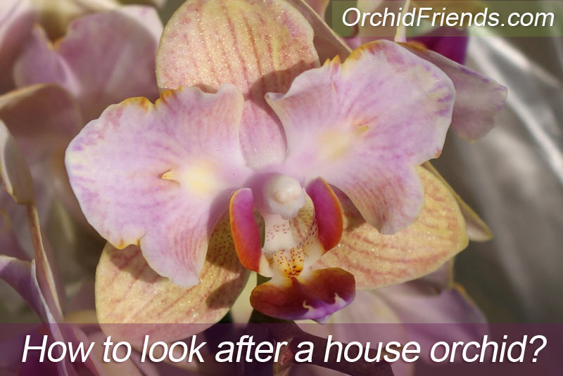 How to care for an orchid house plant