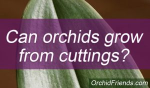 Can orchids grow from cuttings