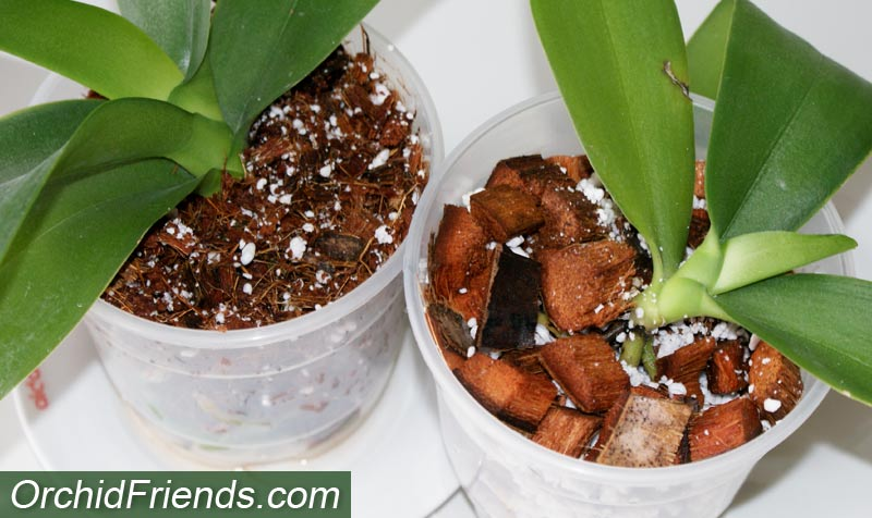 Coconut husk for orchids
