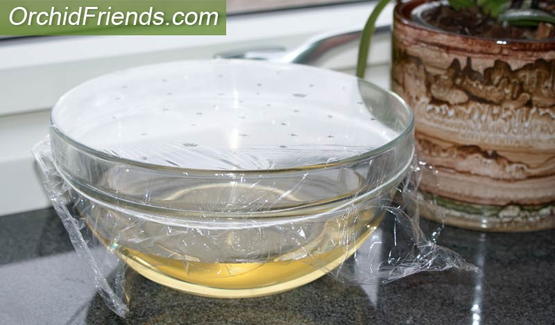 Bowl trap for fruit flies or fungus gnats