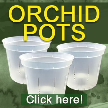 Recommended Orchid pots