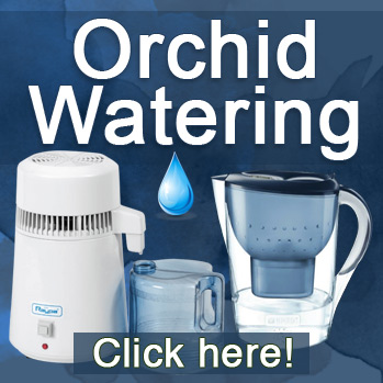Best watering for orchids