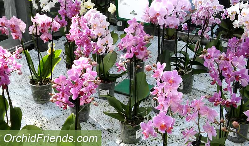 Inspect orchid vendor when bying new orchids