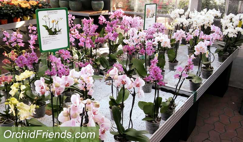 Shop around when buying new orchids
