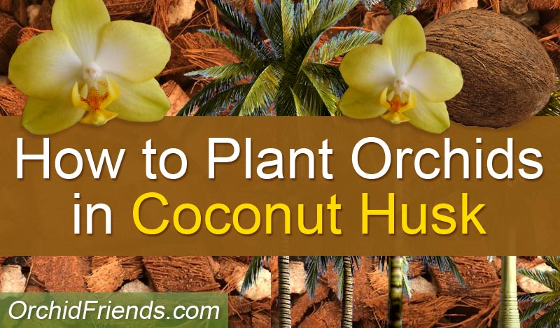 How to Plant Orchids in Coconut Husk