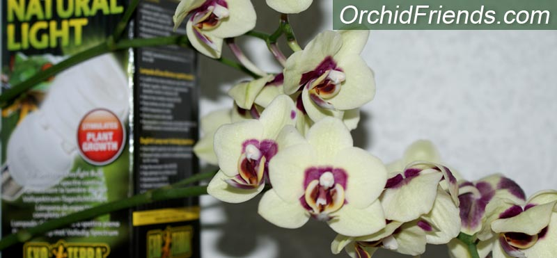 Artificial Light for your Orchid Collection