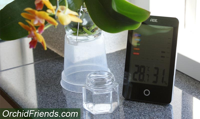 Monitor humidity around your orchids