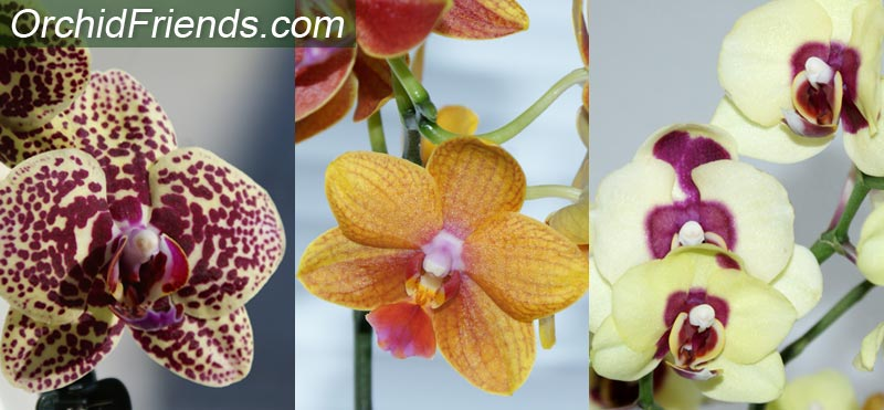 What orchids to collect