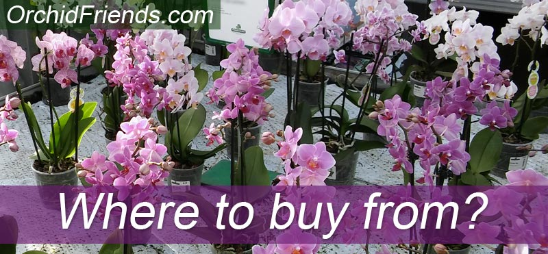 Where to buy orchids from?