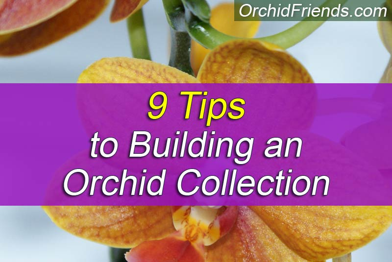 9 Tips to Building an Orchid Collection