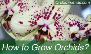 How to Grow Orchids?