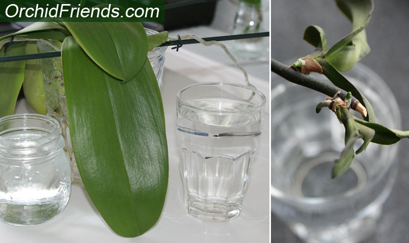 Humidity water bowls for orchids