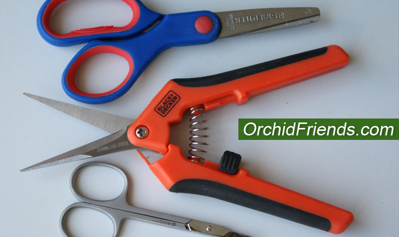 Pruners and scissors for orchids