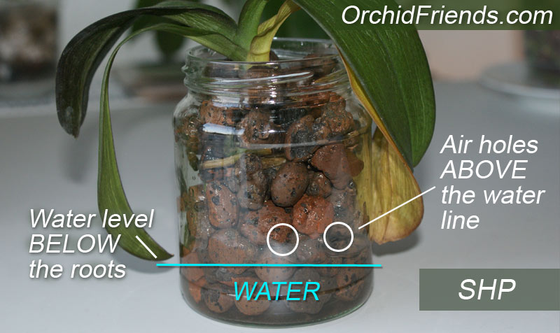 Semi-Hydroponics for Orchids