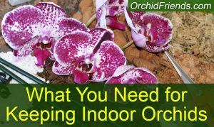 What you need for keeping indoor orchids