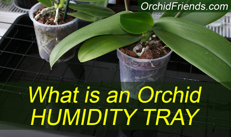 What is a humidity tray for orchids?