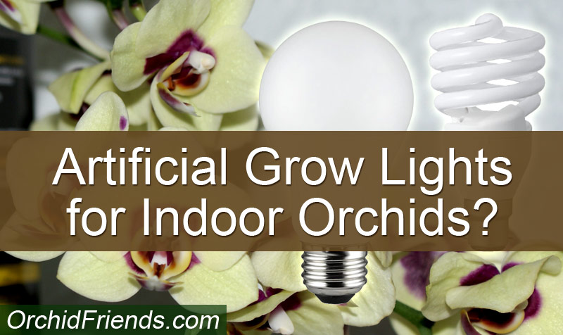 Do Indoor Orchids need artificial growth lamps?