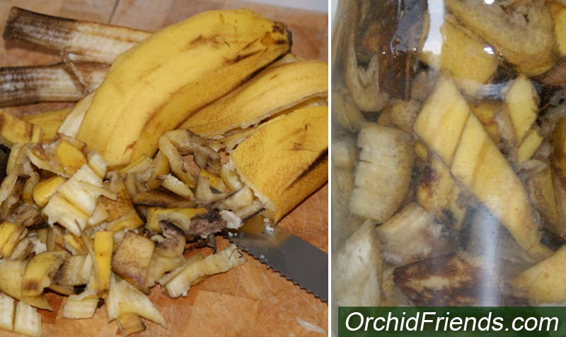 Banana water for orchids