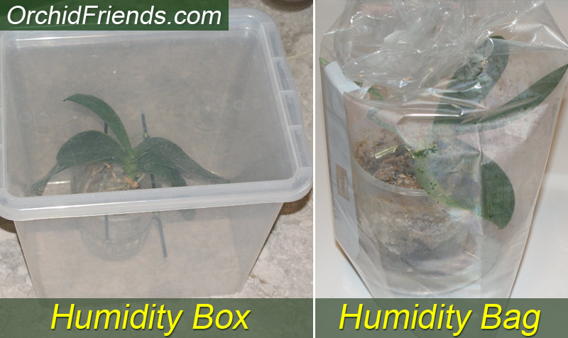Humidity box for dehydrated orchid, plastic bag