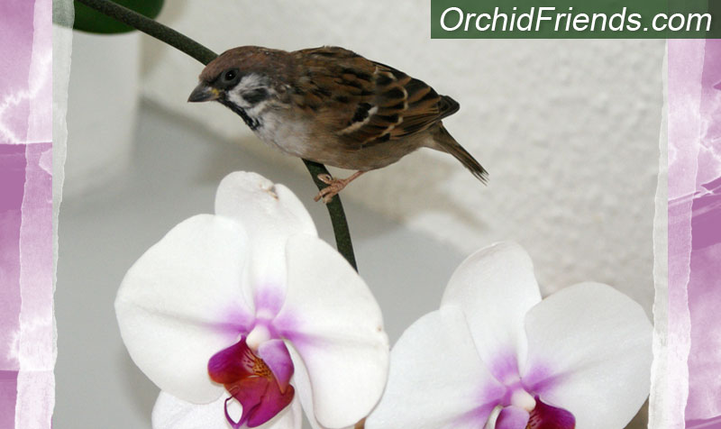 Are orchids safe for pets